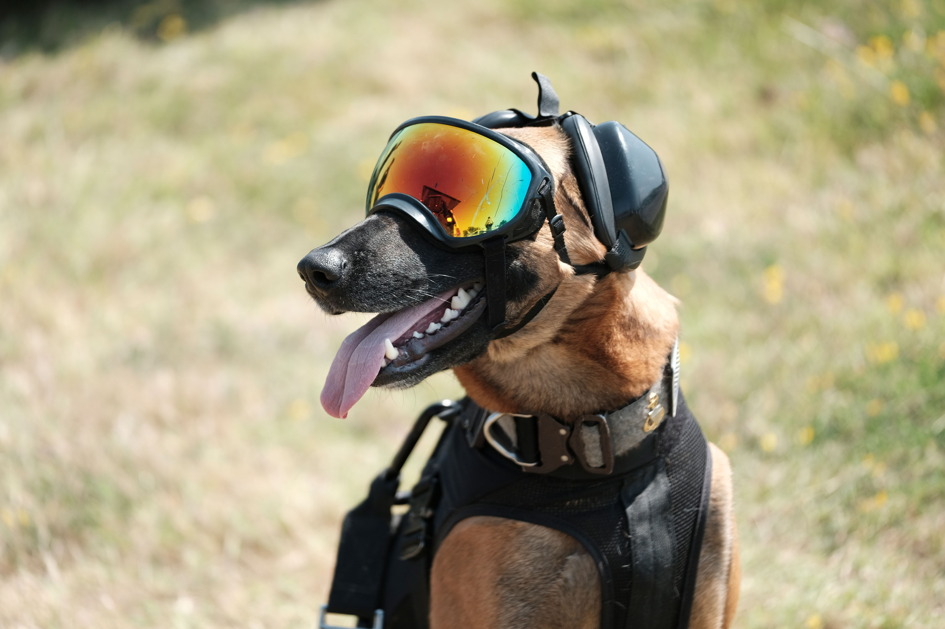 13 Photos of Military Working Dogs Being Awesome