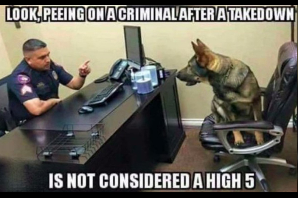 8 funny working dog memes that u0026 39 ll make you wag your tail