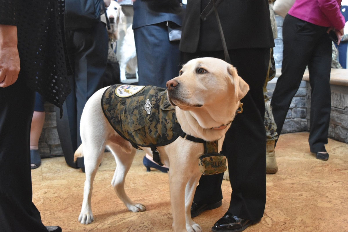 service dog sully h w  bush enlists at walter reed
