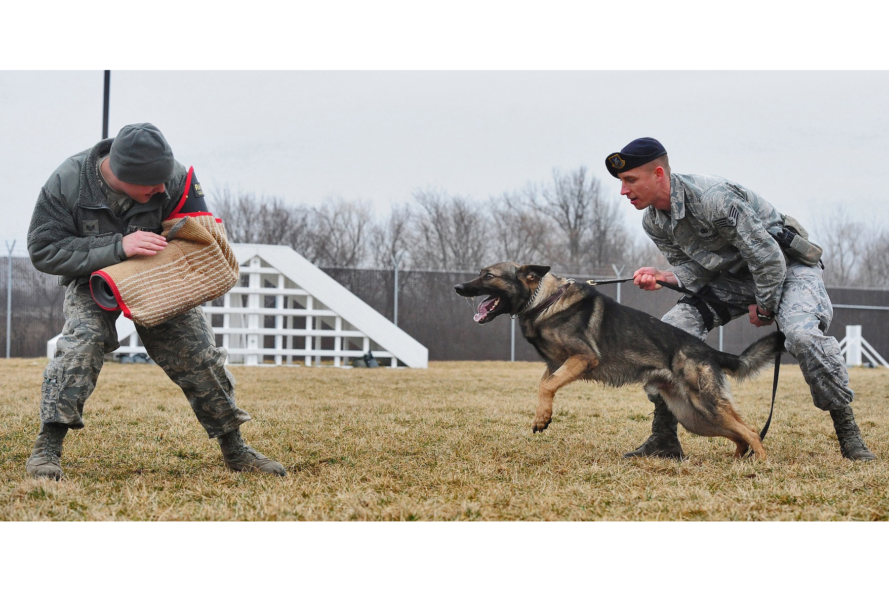 Brothers in Paws: A List of Military-Utilized Dog Breeds ...