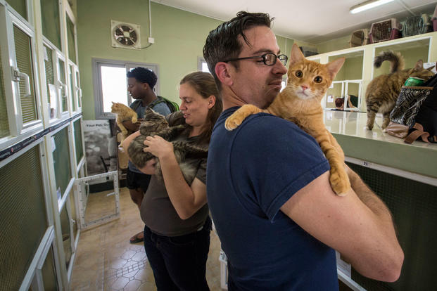 Sailors from the amphibious transport dock ship USS San Antonio (LPD 17) socialize with cats during a community relations project at the Bahrain Society for the Prevention of Cruelty to Animals, Sept. 30, 2016. (U.S. Navy photo/Adam Austin)