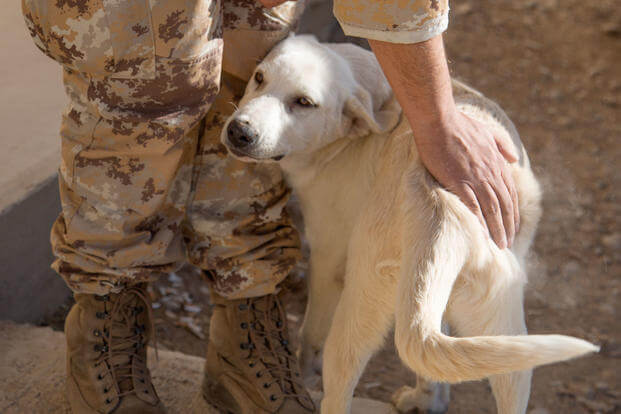 Erby the dog plays with Coalition soldiers in the Kurdistan Training Coordination Center (KTCC), in a Peshmerga Camp near Erbil, Iraq, Oct. 19, 2017. (U.S. Army photo/Tracy McKithern)