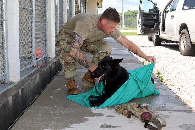 Specialist Sean Nestrick, a military working dog handler assigned to the 510th Military Police Company, 716th Military Police Battalion, 101st Sustainment Brigade, 101st Airborne Division, demonstrates part of the ice sheet cooling process with his working dog, Sidney, at the Fort Campbell military working dog kennel. (U.S. Army/Sharifa Newton)