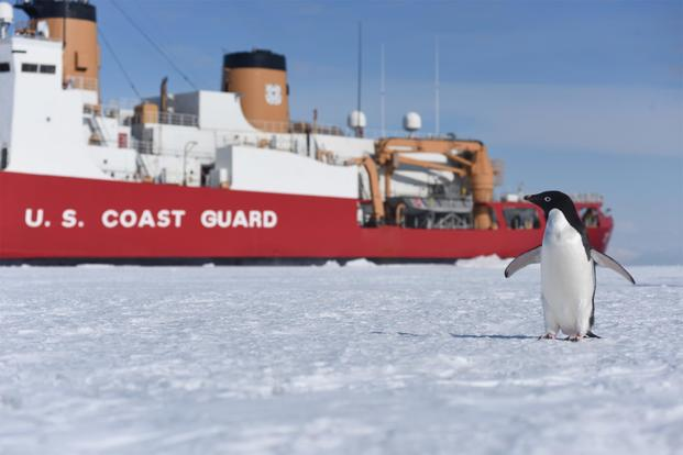 a curious adelie penguin stands near the coast guard cutter polar star on mcmurdo sound