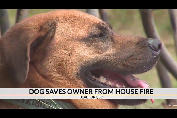 Good Boy! Dog Saves Vietnam Veteran During House Fire ...