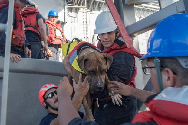 Sailors help Zeus, one of two dogs who were accompanying two mariners who were aided by the amphibious dock landing ship USS Ashland (LSD 48). (U.S. Navy/Mass Communication Specialist 3rd Class Jonathan Clay)