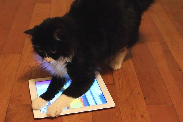 This June 2013, video frame grab provided by T.J. Fuller shows a cat named Beans playing a game called Catzilla on an iPad in Los Angeles.