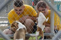 Boatswain's Mate 3rd Class Connor Barlett, from Philadelphia, and Damage Controlman Fireman Anna Cornish, from Tom's River, N.J., both assigned to the submarine tender USS Frank Cable interact with puppies at Guam Animals in Need shelter. (U.S. Navy/Heather C. Wamsley)