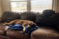 Fern relaxes on the couch (Courtesy of Rachael Harris)