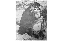"This 1945 photo shows the pet monkey Cisco. The pet of Marine Pvt. Joseph L. Hooker, Cisco was photographed ""cavorting for the fellows outside of Bldg. 216 last Thursday. Cisco balefully posed with a used flashbulb for this rather informal portrait,"" according the original photo caption. (U.S Marine Corps)"